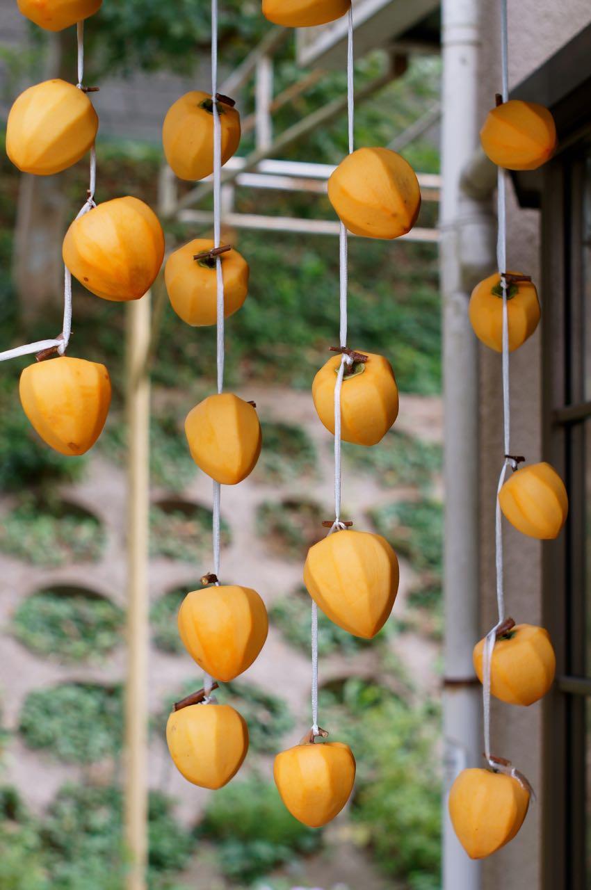 干し柿、つるし柿、コロ柿、あんぽ柿って何が違うの?とりあえず渋柿を吊るしてみた