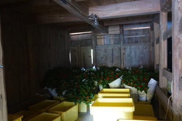 千両収穫15